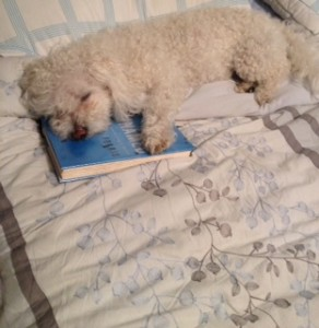 Nothing like falling asleep with a good book.